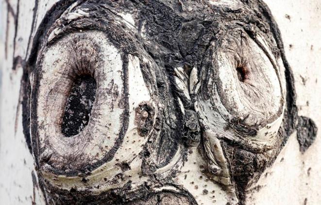 Imatge de l'exposició Tòtems