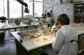 Imatge d'un laboratori de paleontologia de l'ICP