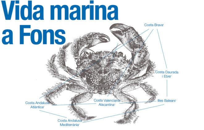 Detall del cartell Vida marina a fons