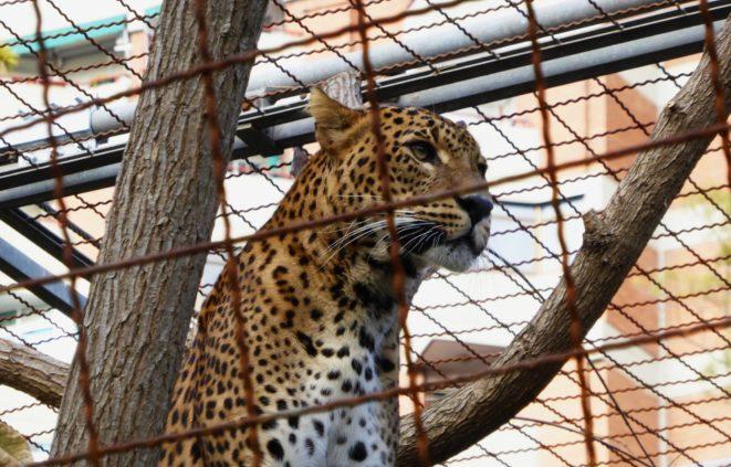 Imatge del zoo de Barcelona per al debat entorn als parcs zoològics