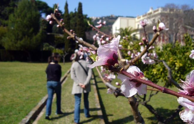 Foto de visites botàniques a la Finca Pedro i Pons