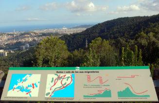 Imatge del turó de la Magarola i un panell informatiu sobre migració de rapinyaires i altres ocells