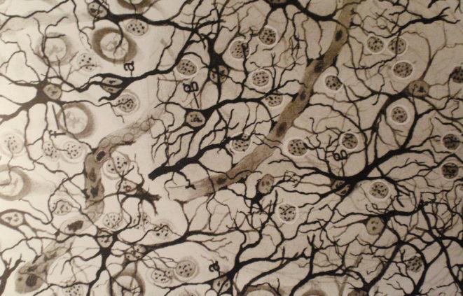 Dibuix de Ramón y Cajal